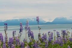 Homer Alaska Royalty Free Stock Photo