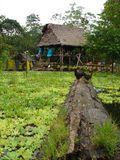 Homes in the amazon Royalty Free Stock Photos