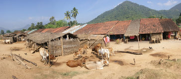 Homes and cattle of a tribal village Royalty Free Stock Image