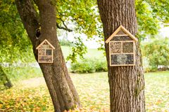 Hand made homes for hibernating insects. Homes for insects and minibeasts in a tree from a finnish park- this construction is a shelter for hibernating insects Stock Photography