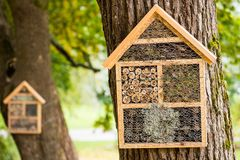 Wooden houses for hibernating insects. Homes for insects and minibeasts in a tree from a finnish park- these constructions are shelters for hibernating insects Stock Photos