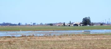 Homes in village , flood field with birds, Lithuania. Homes in village, field with flood water and birds royalty free stock images