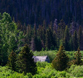 Homestead cabin in the Alaskan Woods Royalty Free Stock Photography