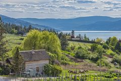 Homestead Cabin and Orchard Okanagan Lake Kelowna British Columbia Canada. On a summer day Stock Image
