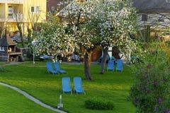 Homey garden in spring Stock Image