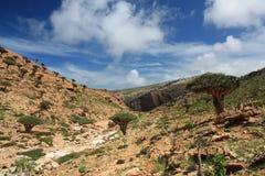 Homhil / Socotra Island. Homhil is an protected area at Socotra Island Stock Photos