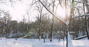 Homiel', Bielorussia Esponga al sole il legno congelato Thgrough del sole nel parco della città di Snowy in Sunny Winter Day stock footage