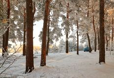 Homiel', Bielorussia - 24 gennaio 2018: un'automobile blu ha parcheggiato nella foresta dell'inverno Fotografie Stock Libere da Diritti