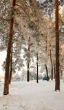 Homiel', Bielorussia - 24 gennaio 2018: un'automobile blu ha parcheggiato nella foresta dell'inverno Immagine Stock Libera da Diritti