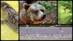 Hommage aux animaux sauvages banque de vidéos