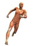 Homme 3 d'anatomie illustration stock
