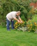 Homme aîné dans un jardin Photos libres de droits