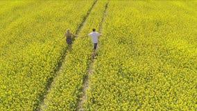 homme affectueux et femme tenant des mains tout en courant à la ferme de colza oléagineux clips vidéos