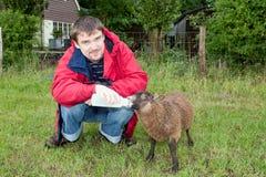 Homme alimentant de jeunes moutons Image stock