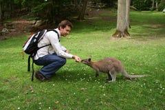 Homme alimentant le petit kangourou Photographie stock libre de droits