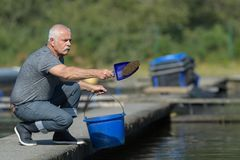 Homme alimentant les poissons commercialement élevés Photo stock