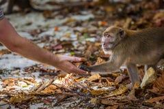 Homme alimentant un singe Photographie stock