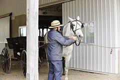 Homme amish préparant son cheval pour un tour Images libres de droits