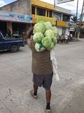 Homme aux choux de transport de travail au-dessus de son épaule Photos stock