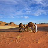 Homme avec des chameaux en désert de Wadi Rum Image libre de droits