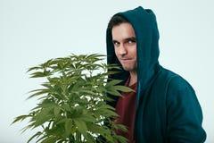 Homme avec l'usine de cannabis photographie stock