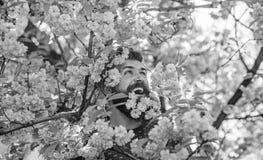 Homme avec la barbe et moustache sur les fleurs roses d'offre heureuse de visage pr?s Hippie avec la fleur de Sakura dans la barb image stock