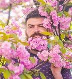 Homme avec la barbe et moustache sur les fleurs roses de visage d'offre stricte près Concept de masculinité Hippie avec la fleur  photos stock