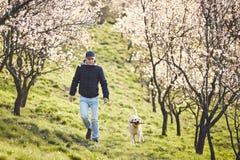 Homme avec la nature de chien au printemps Photos libres de droits