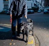Homme avec le chien posant au crépuscule dans la ville Photo stock