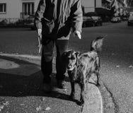 Homme avec le chien posant au crépuscule dans la ville Image libre de droits
