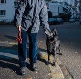 Homme avec le chien posant au crépuscule dans la ville Photographie stock libre de droits