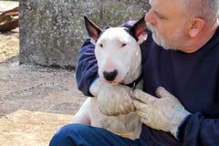 Homme avec le crabot Chien blanc de bull-terrier anglais en compagnie de son propriétaire s'asseyant et appréciant chez le chien  Photo stock