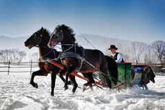 Homme avec le traîneau tiré par des chevaux photo libre de droits