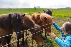Homme avec les chevaux de alimentation de longs cheveux sur le pré Photos libres de droits