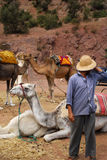 Homme avec ses chameaux Image stock
