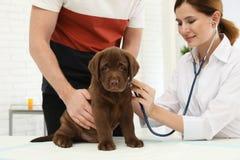 Homme avec son vétérinaire de visite d'animal familier Doc. examinant le chiot de Labrador photographie stock libre de droits
