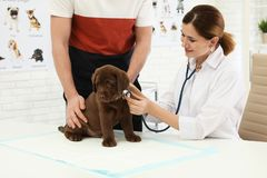 Homme avec son v?t?rinaire de visite d'animal familier dans la clinique Examen de Doc. photos libres de droits