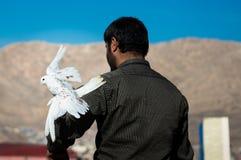 Homme avec une colombe marchant loin Images libres de droits