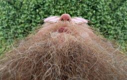Homme avec une longue barbe Photographie stock libre de droits