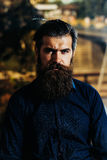 Homme barbu avec la barbe luxuriante photos stock