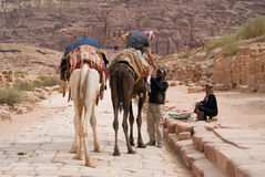 Homme bédouin montant un chameau, PETRA, Jordanie, Moyen-Orient Photos stock