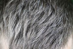 Homme caucasien bel mûr avec les cheveux gris photos libres de droits
