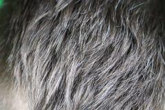 Homme caucasien bel mûr avec les cheveux gris photographie stock libre de droits