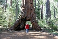 Homme contre l'arbre images stock