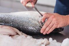 Homme coupant un saumon rose Photographie stock libre de droits