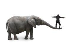 Homme d'affaires équilibrant sur le nez de l'éléphant Photos stock