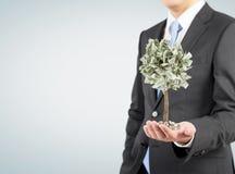 Homme d'affaires avec un arbre minuscule du dollar, gris Images stock