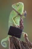 Homme d'affaires de caméléon Image libre de droits
