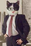 Homme d'affaires de chat Images stock