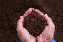 Homme d'affaires Holding Soil Photographie stock